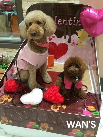 バレンタイン撮影