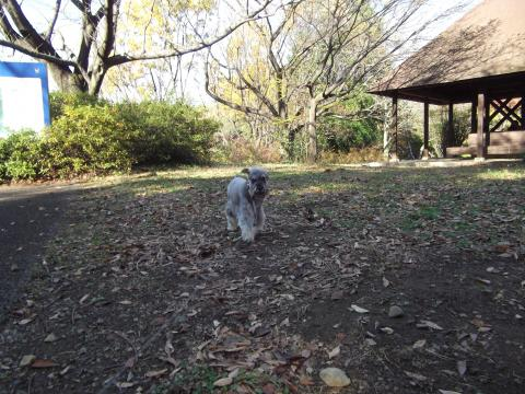 昭和記念公園にてウィル