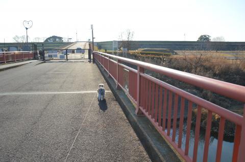 渡良瀬遊水地にてウィル