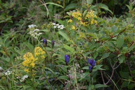 9清水平附近の花