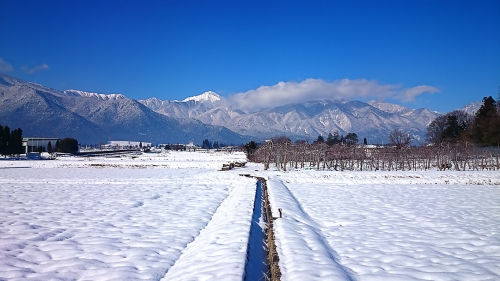 冬のりんごの木と常念岳