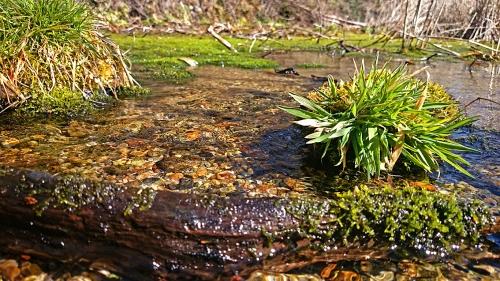 ワサビ田の用水路