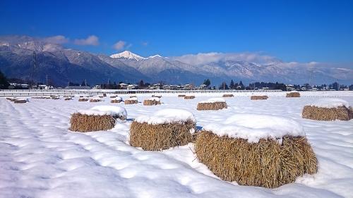 冬の田んぼと常念岳