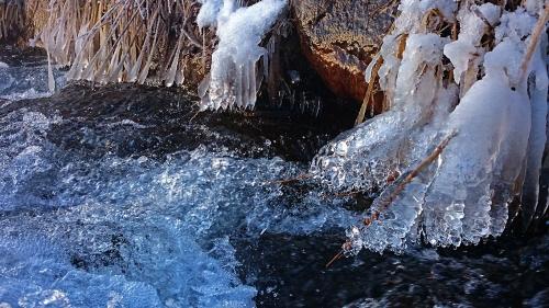 用水路のふちの枯草にも氷