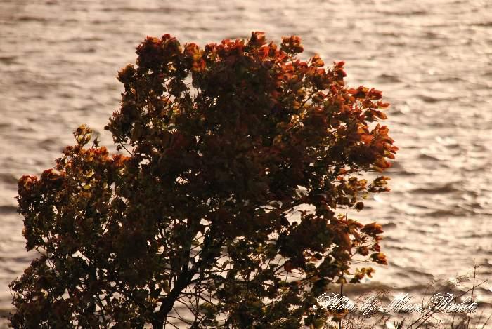 乙女川にて 愛媛県西条市禎瑞下 4月の植物