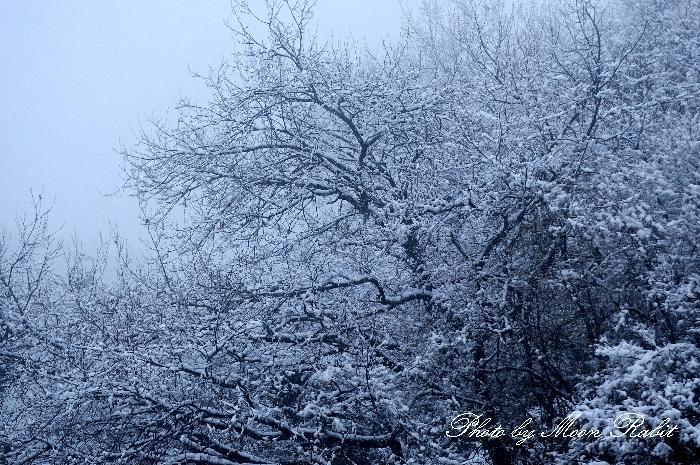 石鎚山ハイウェイオアシス付近の木立の雪