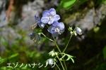 DSC_0632_moto_urakawa_ezo_hanashinobu_1a.jpg