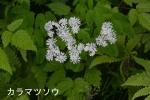 DSC_0749_nikanbetsu_karamatsuso_1as.jpg