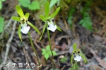 DSC_1017_dobashi_ichiyo_ran_1as.jpg