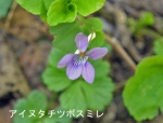 DSC_1070_shikotsuko_ainu_tachitsubo_sumire_1as.jpg
