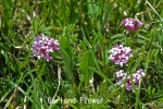 DSC_1943_1_garland_flower_aa.jpg