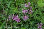 DSC_2691_1_garland_flower_aa.jpg