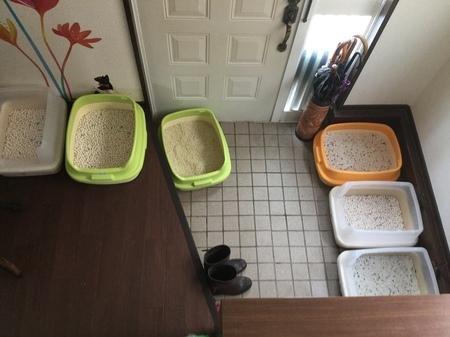猫トイレ3