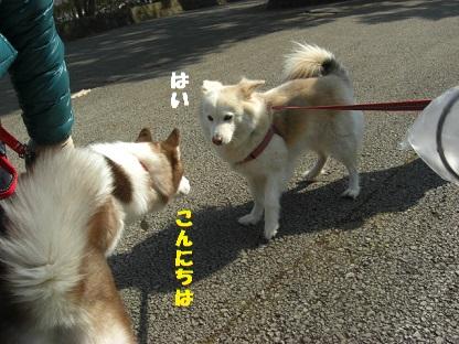 CIMG6140.jpg
