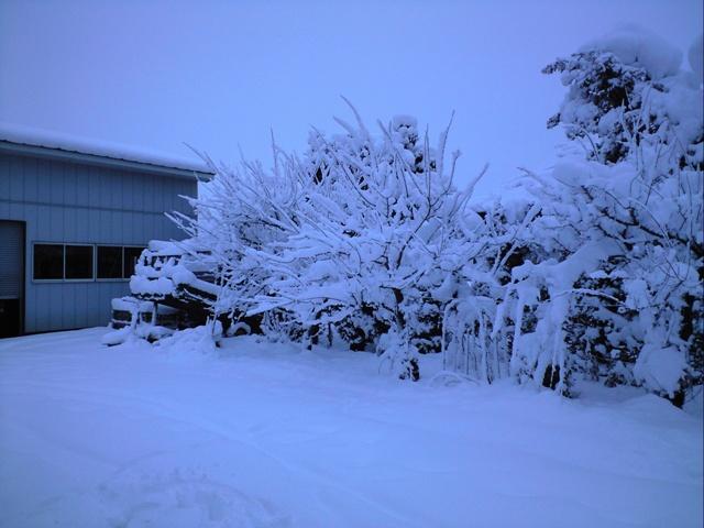 Snow0812