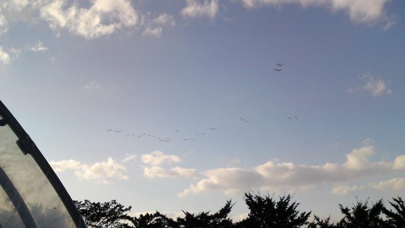 Swan110318b