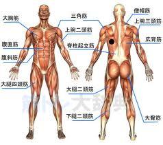 imagesCA78JQUI 全身の筋肉
