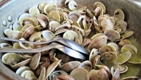 かいsteamed-clams-603110__180
