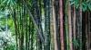 bamboo-142635__180.jpg