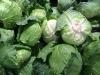 cabbage-1663179__180.jpg