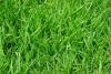 grass-375586__180.jpg