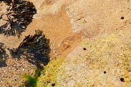 seaweed-333899__180.jpg