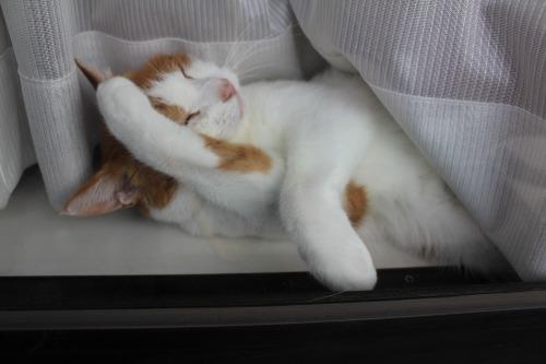 ブログNo.329(窓辺の猫)6