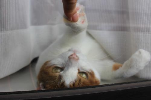 ブログNo.329(窓辺の猫)11