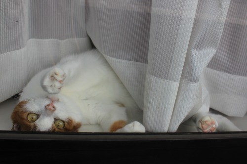 ブログNo.329(窓辺の猫)12
