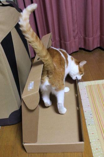 ブログNo.335(箱と猫)1
