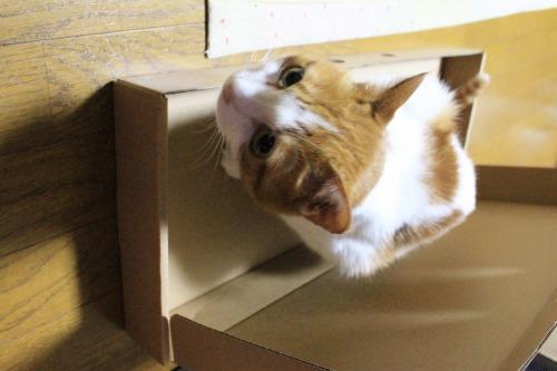 ブログNo.335(箱と猫)2