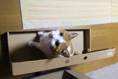 ブログNo.335(箱と猫)3