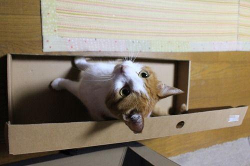 ブログNo.335(箱と猫)4
