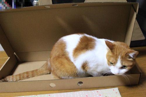 ブログNo.335(箱と猫)5