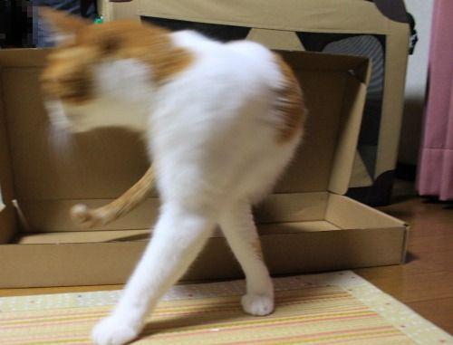 ブログNo.335(箱と猫)6