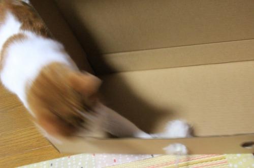 ブログNo.335(箱と猫)7