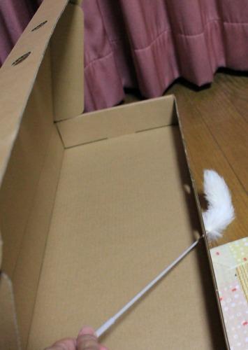ブログNo.335(箱と猫)8