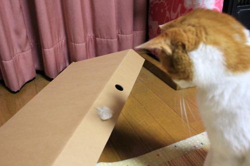 ブログNo.335(箱と猫)10