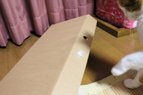 ブログNo.335(箱と猫)12