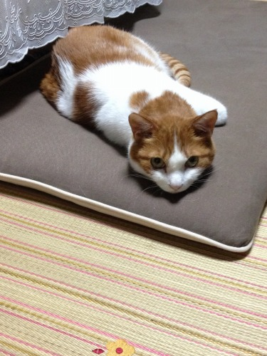 ブログNo.333(真夜中の猫)1