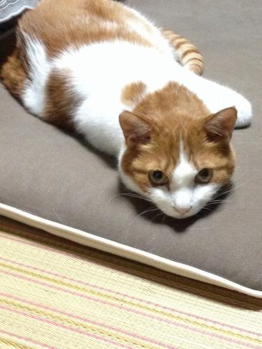 ブログNo.333(真夜中の猫)2
