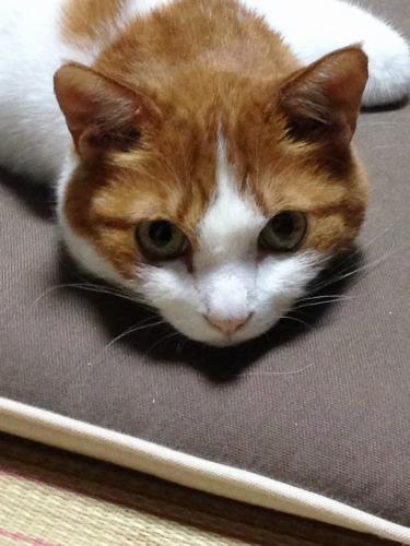 ブログNo.333(真夜中の猫)3
