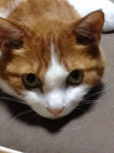 ブログNo.333(真夜中の猫)4