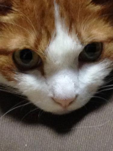 ブログNo.333(真夜中の猫)6
