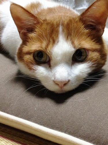 ブログNo.333(真夜中の猫)8