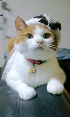 ブログNo.329(窓辺の猫・おまけ)14