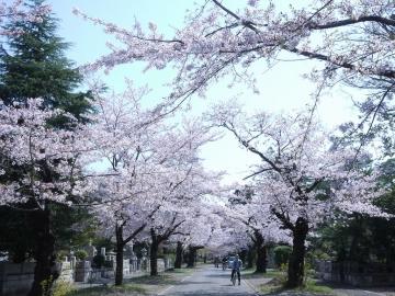 hanami201803313.jpg