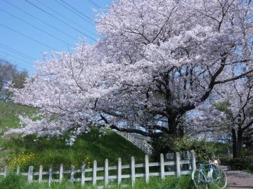 hanami201803314.jpg