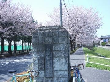 hanami201803316.jpg