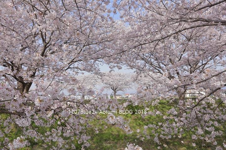 5D4_7689_180416_1207Blue.jpg